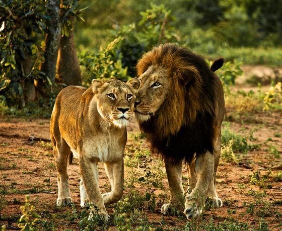 Sasangir Wildlife Tours